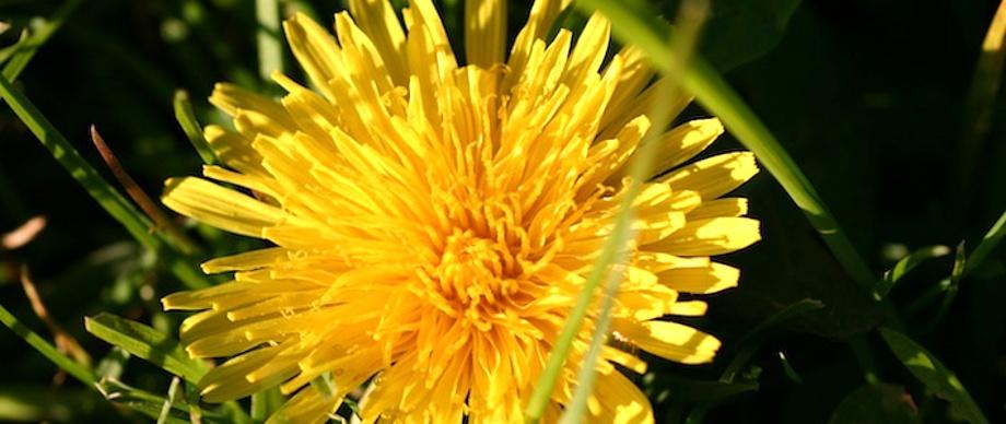 Blüte gelb